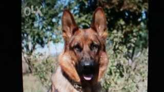 Пропала собака Зовут Лайма. Помогите найти и вернуть. Ссылка в описании.
