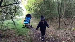 If you go down to the woods today ... | Combi UK