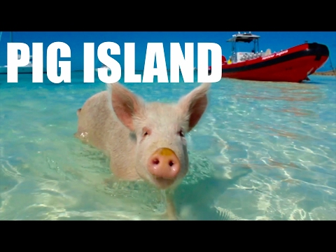 PIG ISLAND IN THE BAHAMAS JAN 2017 | SWIMMING WITH BABY PIGS!!! Compilation, Cay Island, Exuma
