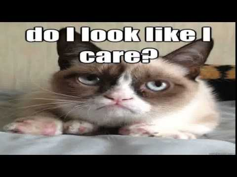 Funny Memes Clean Cats : The grumpy cat meme funniest the grumpy cat meme compilation 2015