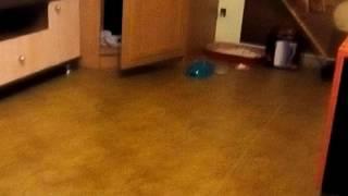 Кошка боится бутылку