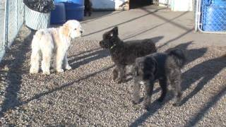 Companions And Friends Doggie Daycare Edmonton Normans First Day