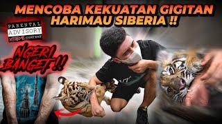TES KEKUATAN G1G1T4N HARIMAU SIBERIA !! SIBERIAN TIGER B1T3 FORCE TEST !!