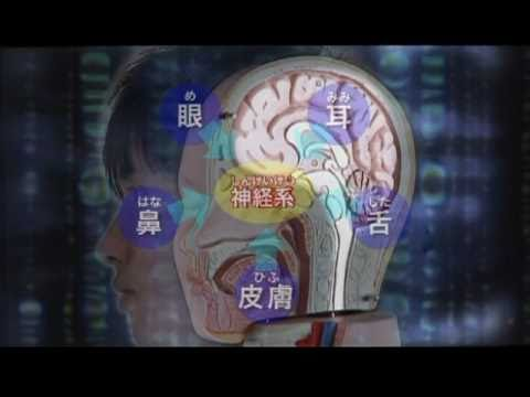 資料篇~人体のふしぎ~(2)神経 thumbnail