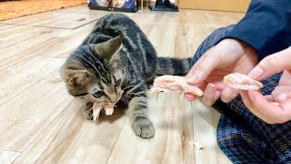 子猫に初めてささみの丸かじりを許したら大変なことになりましたw