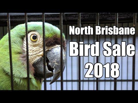 North Brisbane Bird Sale 2018