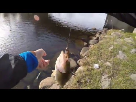 Charles River Topwater Fishing
