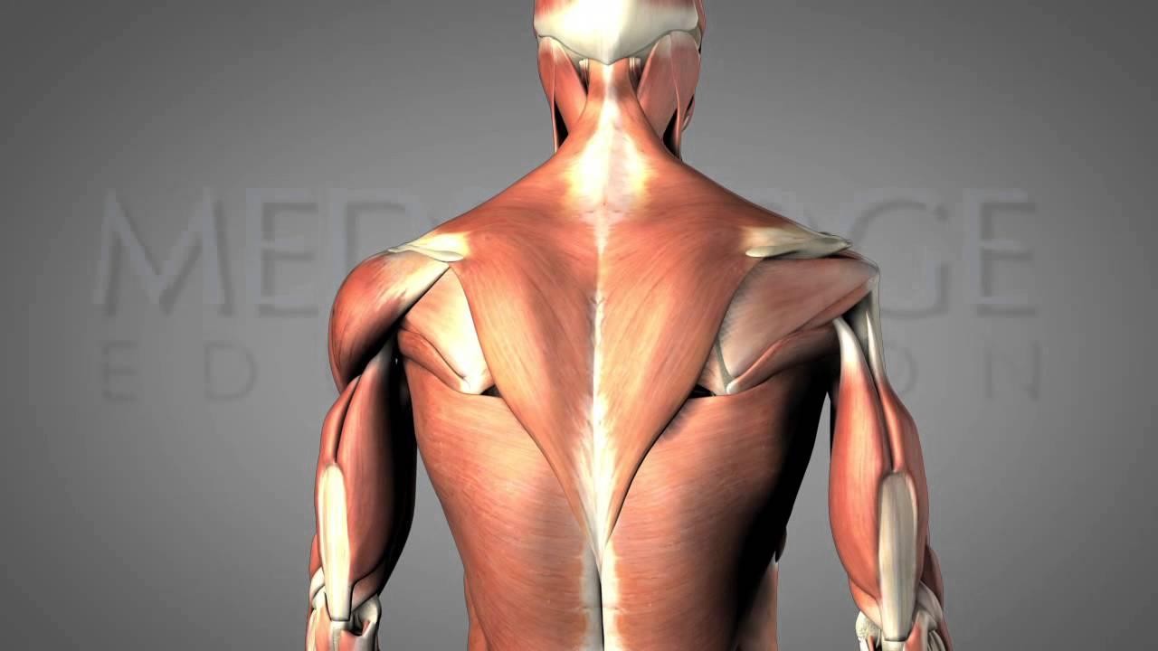 The Hemiplegic Shoulder Video: J.J. Mowder-Tinney   MedBridge - YouTube