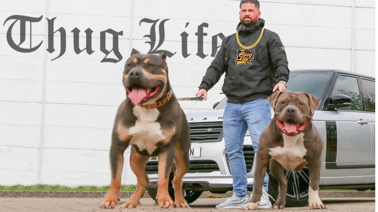 10 Best Dogs for Thug Life