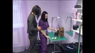 Стрижка собак La Bonitta - программа