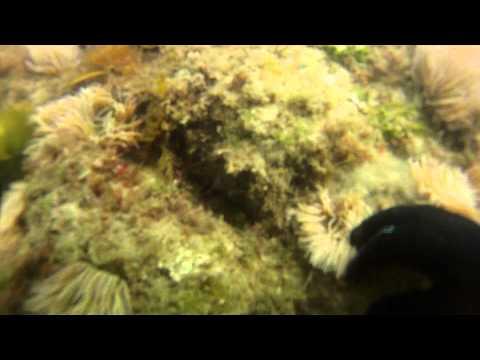 mergulho de praia   praia da duquesa 6 a 7metros
