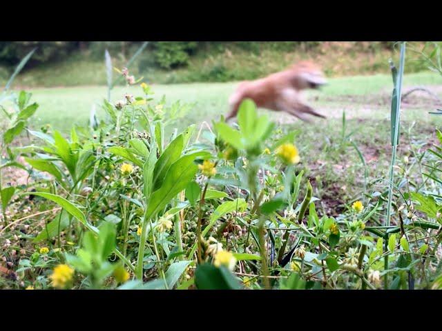 草花を撮りたいのに後ろの柴が気になる On a fine day
