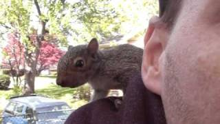 Pet Baby Squirrel Part 1