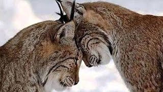 Половое размножение животных. Ф 1.  Урок биологии.