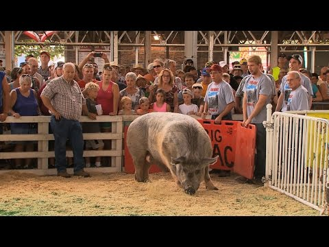 Big Animals | Iowa State Fair 2015