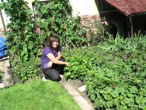 Vườn rau tự trồng.