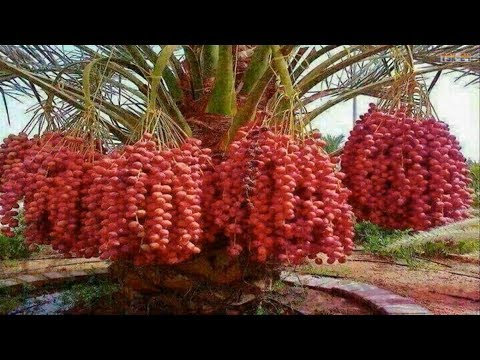 WOW!!! Most Amazing Fruits & Vegetables Farming Technique - Amazing Agriculture Technology