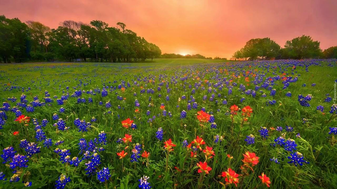 Wiosna na łące - piosenka z tekstem - YouTube