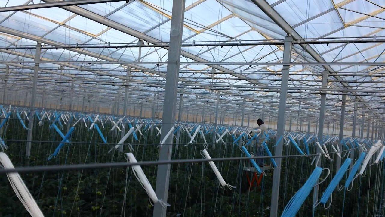 Intergrow Greenhouses Inc  Albion, NY