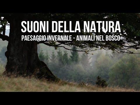 Suoni della Natura  - Paesaggio invernale - Animali nel Bosco