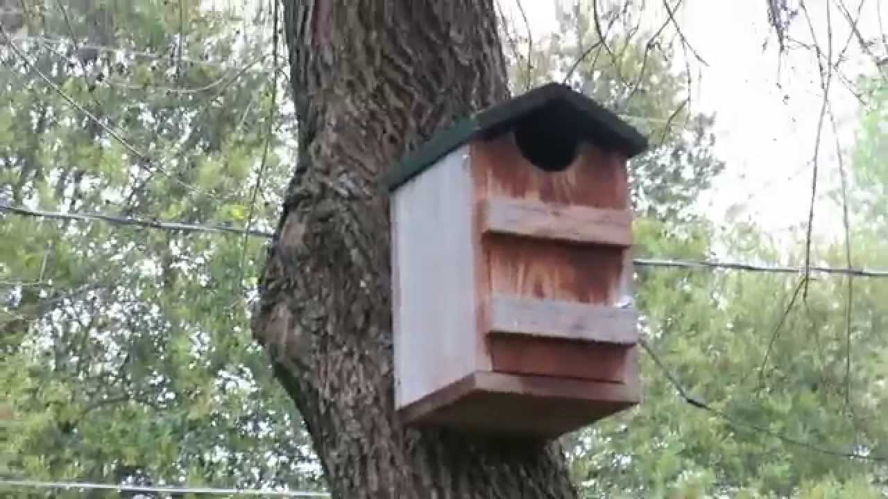eastern screech owl house this thing is awesome youtube