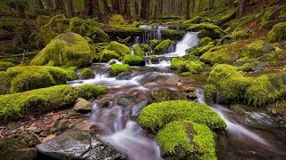 Beautiful Piano Music Live, Best instrumental music for Sleep and Study Relaxing, Forest water sound