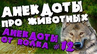 Анекдоты про животных. Анекдоты от Волка #12