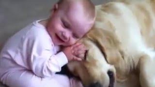 かわいい犬と赤ちゃん【ゴールデンレトリバーと赤ちゃんのじゃれあいに...