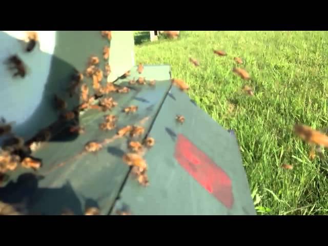 Honey bee landing zone