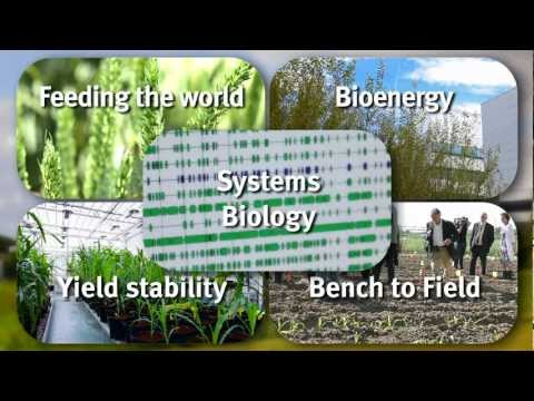 Presenting VIB Department of Plant Systems Biology, UGent