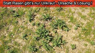Neu Gesäter Rasen Voller Unkraut – Ursachen & Lösungen / Nur Unkraut Im Neu Gesäten Rasen - Was Tun