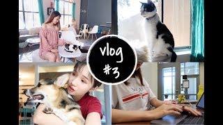 【颠颠】vlog #3| 我是如何度过final week的| 杂七杂八的日常| 日常减压| 猫猫狗狗很多的一支视频