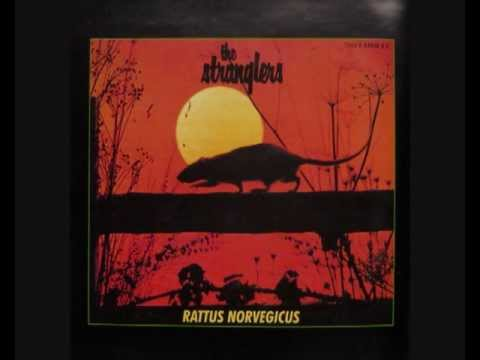 Stranglers, The - Choosey Susie