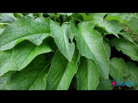 Вопрос: Что за растение на фото Оно лекарственное?