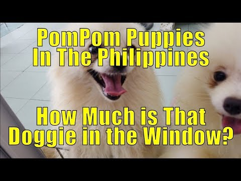 PomPom Puppies, Prices In The Philippines.