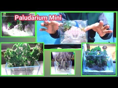 inspirasi-desain-aquascape-mini-paludarium-untuk-pemula