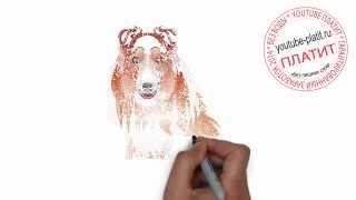 Нарисованные карандашом собаки  Как нарисовать карандашом поэтапно пушистую Колли