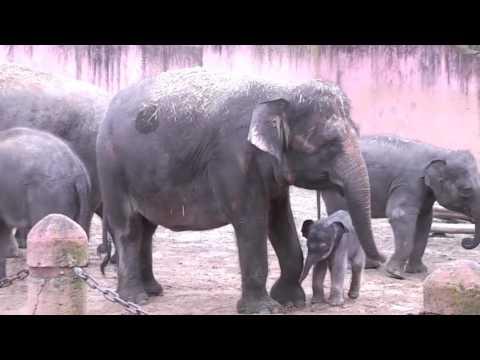 Elefantenbabys im Erlebnis-Zoo Hannover 2016