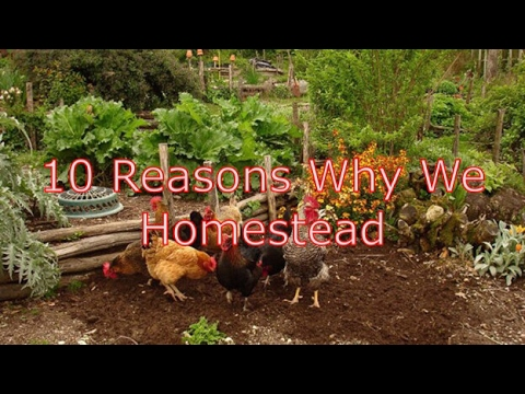 10 Reasons Why We Homestead