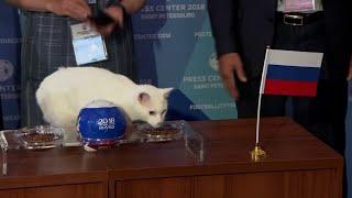 Mondial 2018: Achille le chat donne la Russie gagnante pour le match d'ouverture