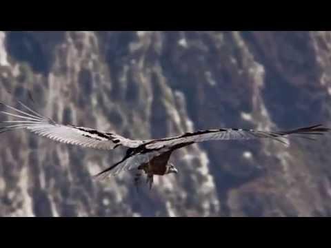 Colca Canyon Travel Video
