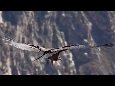 Colca Canyon Travel Video