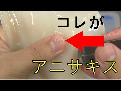 イカのアニサキスの見つけ方(字幕解説)