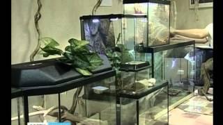 Выставка экзотических домашних животных