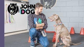 Jak nauczyć psa skakania przez przeszkody? – TRENING – John Dog