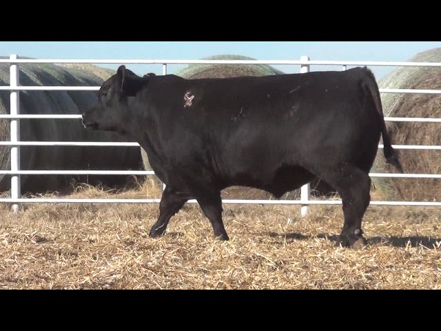 Express Ranches Lot 370