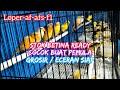 Stok Betina Melimpah Toko Kenari Wahyu Kuncoro Harga Kenari Terbaru   Mp3 - Mp4 Download