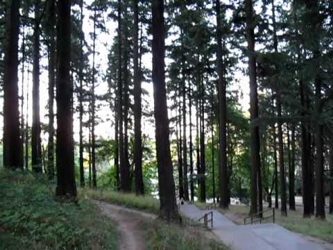 Mt. Tabor Park steps