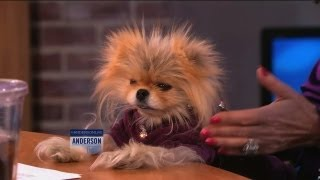 Lisa Vanderpump's Adorable Dog, Giggy