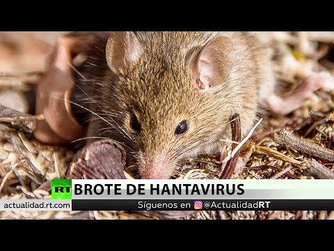 El brote de hantavirus en Argentina: ¿Qué está pasando?